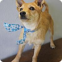 Adopt A Pet :: Atticus - Yukon, OK