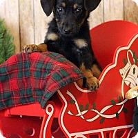Adopt A Pet :: Cece - Waldorf, MD