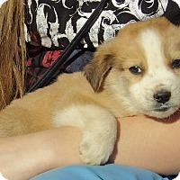 Adopt A Pet :: Lincoln (5 lb) Video! - Williamsport, MD