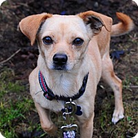 Adopt A Pet :: Kathy Sunshine - North Bend, WA