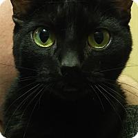 Adopt A Pet :: Zooey - McKenna, WA