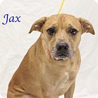 Adopt A Pet :: Jax - Bradenton, FL