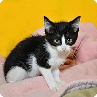 Adopt A Pet :: Charmander - Neenah, WI