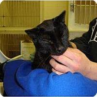 Adopt A Pet :: Jax - Warren, MI