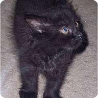 Adopt A Pet :: Bob - Delmont, PA