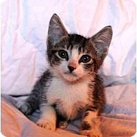 Adopt A Pet :: Navi - Irvine, CA