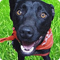 Adopt A Pet :: Koda, fun, loving, trained - Sacramento, CA
