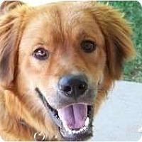 Adopt A Pet :: Bear - Denver, CO