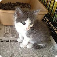 Adopt A Pet :: Desi & Lucy - Island Park, NY