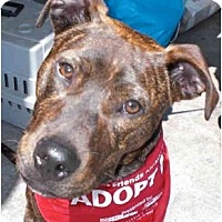 Adopt A Pet :: Butters - Los Angeles, CA