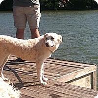 Adopt A Pet :: Heidi - Foster, RI