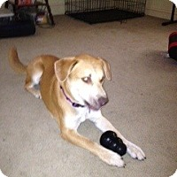 Adopt A Pet :: Jake - Bedford, TX
