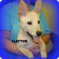 Adopt A Pet :: CLAYTON - Henderson, KY