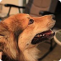 Adopt A Pet :: Diamond - Ashland, OR