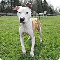 Adopt A Pet :: Crystal - Dayton, OH