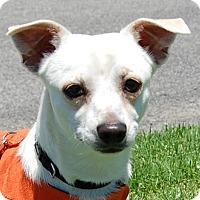 Adopt A Pet :: Frankie - West Los Angeles, CA