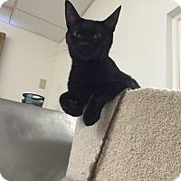 Adopt A Pet :: Winnie - Bensalem, PA