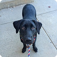 Adopt A Pet :: Chrissy in Ct - East Hartford, CT