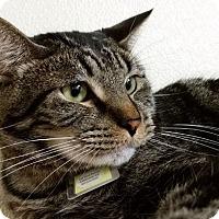 Adopt A Pet :: Alfie - Lakewood, CO