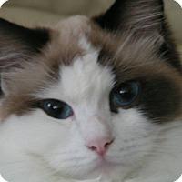 Adopt A Pet :: Annika - Novato, CA