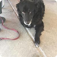 Adopt A Pet :: Sadie - Healdsburg, CA