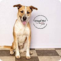 Adopt A Pet :: Zoro - Apache Junction, AZ