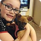 Adopt A Pet :: Wonton