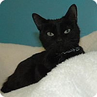 Adopt A Pet :: Mockingbird - Cincinnati, OH