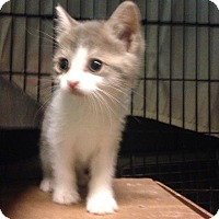 Adopt A Pet :: Lucca - East Brunswick, NJ