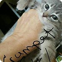 Adopt A Pet :: Crumpet - Hainesville, IL