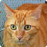 Adopt A Pet :: Scamper - Englewood, FL