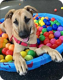 Shepherd (Unknown Type) Mix Dog for adoption in San Luis Obispo, California - Simba