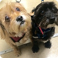 Adopt A Pet :: Cole - Oak Ridge, NJ