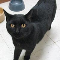 Adopt A Pet :: Tiana - Reeds Spring, MO