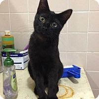 Adopt A Pet :: Galaxy - Central Islip, NY