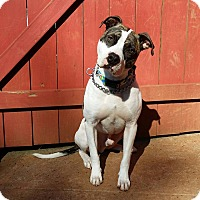 Adopt A Pet :: Blake - West Springfield, MA