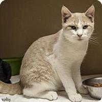 Adopt A Pet :: Maurice - Lincolnton, NC