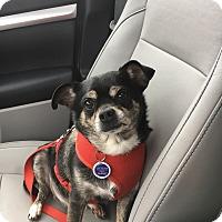 Adopt A Pet :: Paco - Beachwood, OH