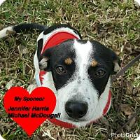 Adopt A Pet :: Ricky - San Leon, TX