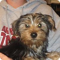 Adopt A Pet :: Ricky - Rochester, NY