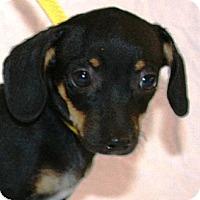 Adopt A Pet :: Gilda - Gilbert, AZ
