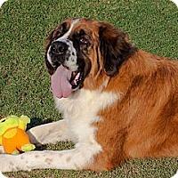 Adopt A Pet :: LOLA - Glendale, AZ