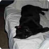 Adopt A Pet :: Blackie Joe - Hamburg, NY