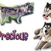 Adopt A Pet :: Precious - Seminole, FL