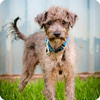 Adopt A Pet :: Jack Sprat - Houston, TX