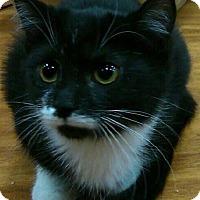 Adopt A Pet :: Canela - Hamilton, ON