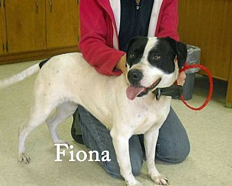 Pointer/Harrier Mix Dog for adoption in Halifax, North Carolina - Fiona