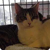 Adopt A Pet :: Hyacinth - Berkeley Hts, NJ