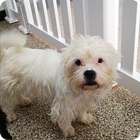 Adopt A Pet :: Sheldon - Thousand Oaks, CA