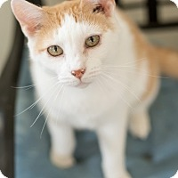 Adopt A Pet :: Marco - Wilmington, OH